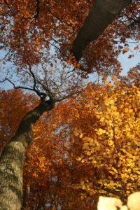 Kräuterwanderung Herbst – 3 Stunden: Herbstkräuter als Nahrung und Medizin