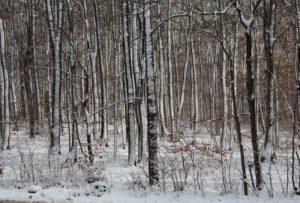 Kräuterwanderung Winter – 3 Stunden: Winterkräuter als Nahrung und Medizin